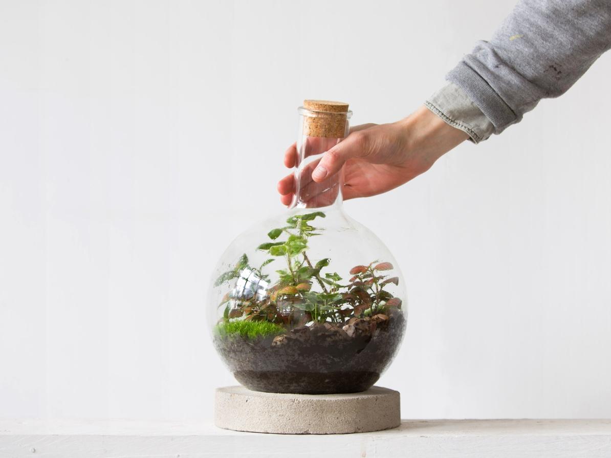 Boiling-Flask_ScaleLdnterrariums